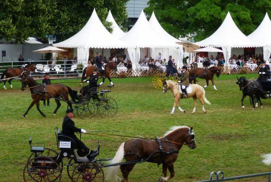 Quadrille mit Kutschen und Reitern aus vier Landgestüten