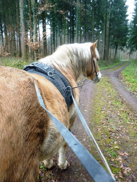 Ein dreckiges Langzügelpony im Wald