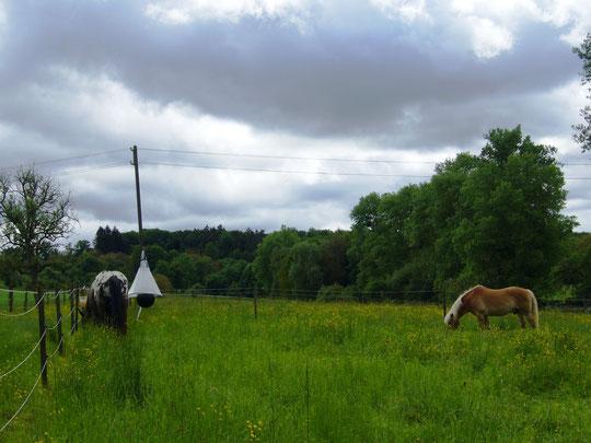 Und nach getaner Arbeit auf der Weide :-)