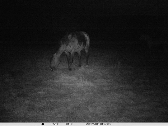 Die Jungs nachts im Regen auf der Weide