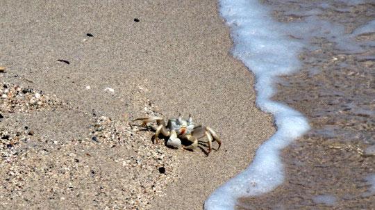 Getier gibts auch am Strand. :-)