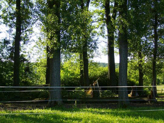 Vier Bäume einfach abgebrochen