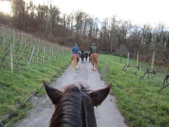 Weihnachtsausritt mit Kurti und den Pferden aus seinem Berittstall