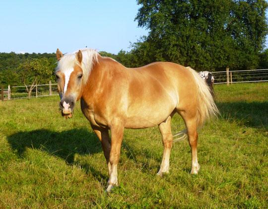 Das weltbeste Pony auf der Weide :-)