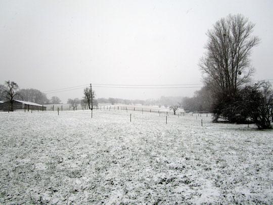 Unsere Weiden in Weiß