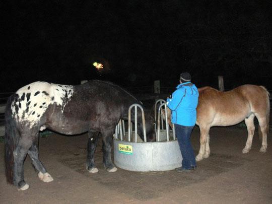 Um 00.10 Uhr am Stall: während des Feuerwerks futtern die Pferde in Ruhe ihr Heu