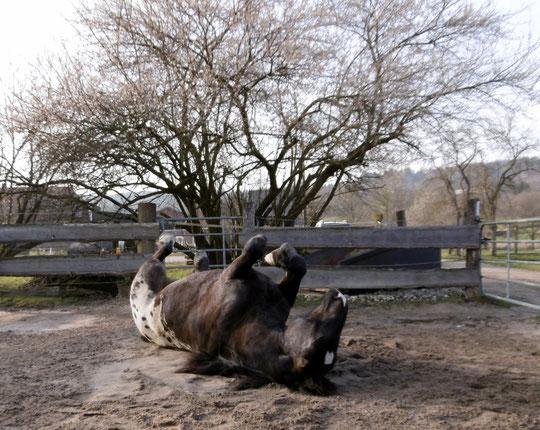 Pferdewellness