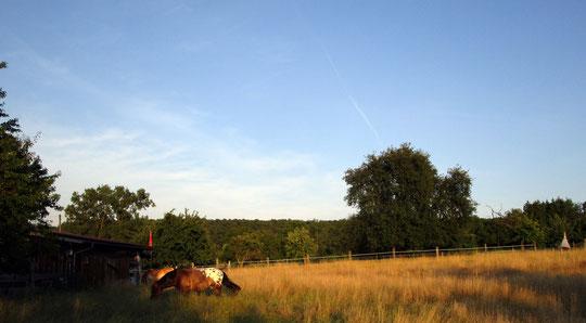 Sanftes Sonnenlicht am Abend; die Pferde heute erstmals auf Weide Nr. 1