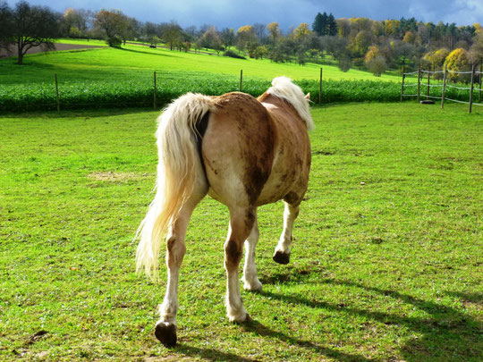 Das war mal ein sauberes Pferd :-(