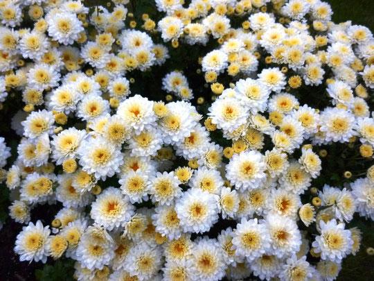 Meine Blumen im Garten