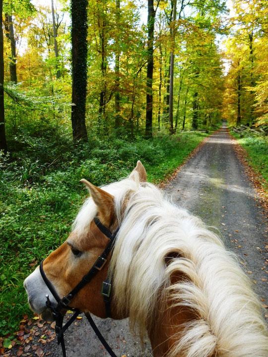 Mit Amor im Herbstwald