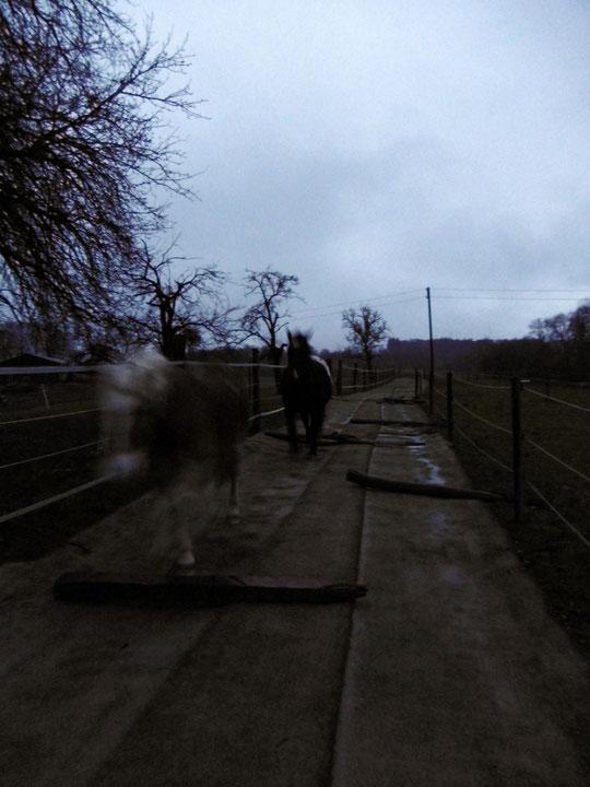 Die Pferde galoppieren hoch und runter - nach 24 Stunden Dauerregen und 75 l/qm!
