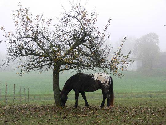 Kurti auf der Suche nach Äpfeln