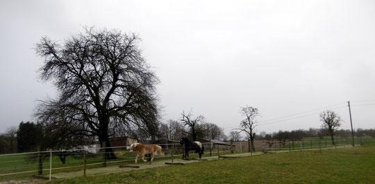 Während des Sturms galoppiert es feucht-fröhlich den Trailweg entlang