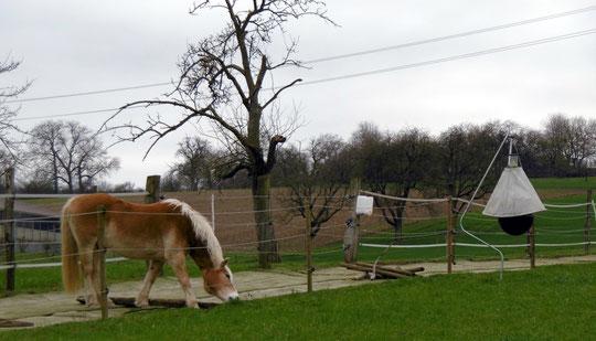 Die Bremsenfalle steht - und Amor macht sich schon auf, die Weidezäune freizuhalten.
