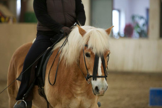 Mein bestes Pony!