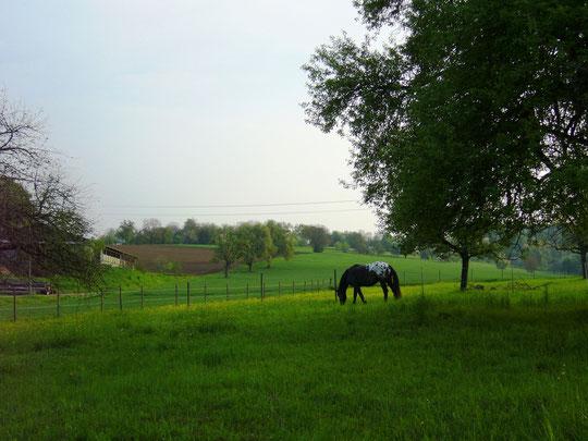 Kurti beim After-Work-Imbiß auf der Weide