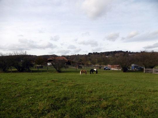 Die Ponys auf Weide Nr. 1, die noch stundenweise zur Verfügung steht