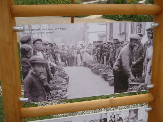 Kirschenmarkt um 1900