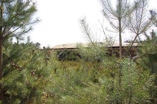 Hier soll die Hütte der alten Frau gestanden haben!