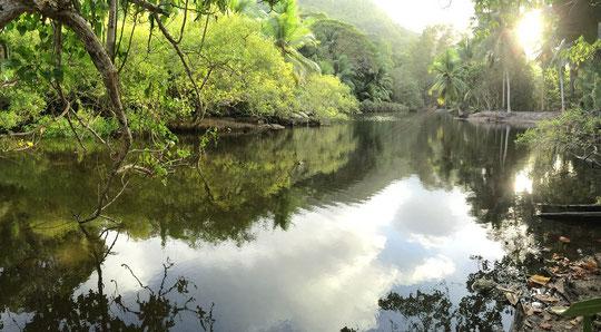 Anse Forbanse mangroves