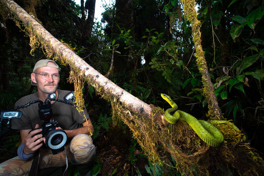 A Black-speckled Palm Pitviper and I in the highlands of Costa Rica. © Wouter Beukema