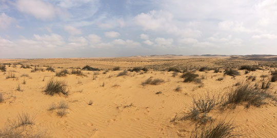 View on the sanddunes in the NW Negev desert. Click to enlarge.