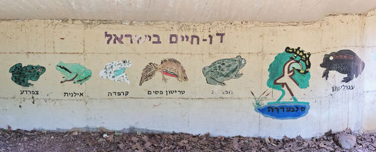 Nice mural displaying most of Israel's native amphibians at the visitors centre of Tel Dan.