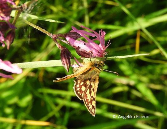 Gelbwürfeliger Dickkopffalter (Carterocephalus palaemon), , © Mag. Angelika Ficenc