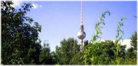 Das Bild zeigt den Fernsehturm in Berlin von Kreuzberg aus gesehen. Auf dem Foto sieht man Pflanzen, die auf dem ehemaligen Mauerstreifen der Grenze wachsen. Die Mauer zeigt bis heute ihre Spuren.