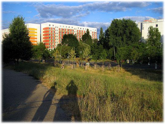 Bilder von Plattenbauten in Hohenschönhausen. In Berlin Hohenschönhausen stehen zahlreiche sanierte hübsche Plattenbauten. Fotos von Plattenbauwerken in Berlin.