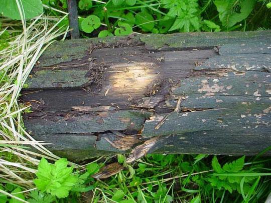 Holzschadensermittlung für Hölzer im Außenbereich