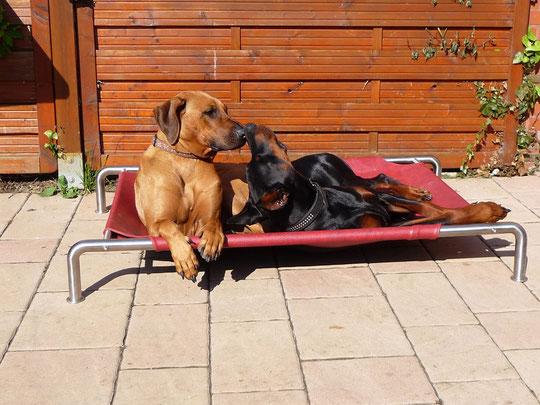 Hunde kuscheln auf Luxushundeliege