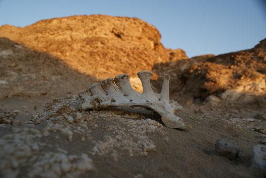 In ein paar Wochen wird der Wüstensand die Knochen überdecken.