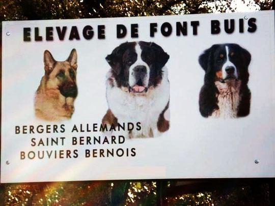 eleveur chiens font buis