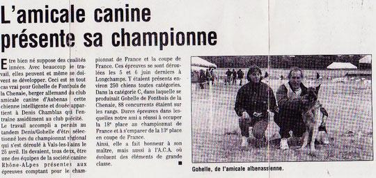 race canine : bouvier bernois,saint bernard,berger allemand