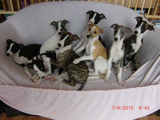 v.l.n.r. Rahja, Lischa, Coco, Joko, Fuego, Baileys, Paul und Ronja