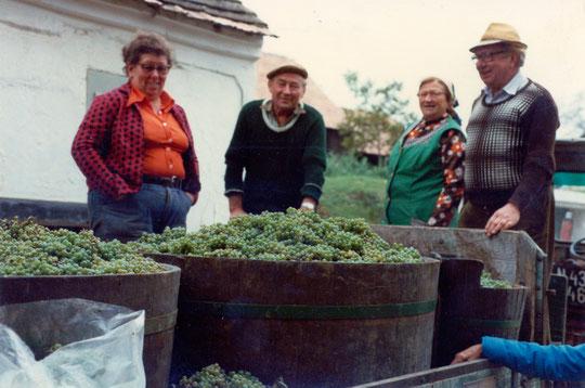 Hörersdorf: Sept. 1982 - Weinlese mit Agnes (Nessi) Richter,  Josef (Pepperl) Neckam, Leopoldine (Poidi)  Kratochwil u. Franz Kratochwil - Foto v. Agnes Richter