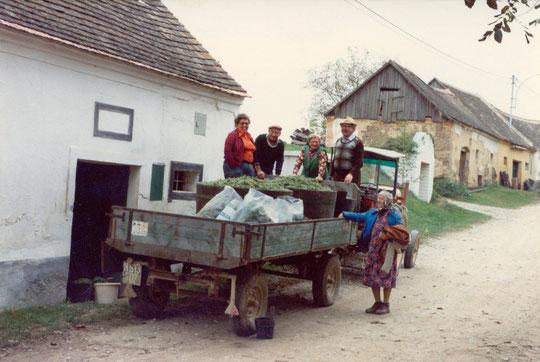 Hörersdorf: Sept. 1982 Weinlese in der Oberen Kellergasse mit Agnes (Nessi) Richter, Josef (Pepperl) Neckam, Leopoldine (Poidi) Kratochwil, Franz Kratochwil u. Agnes Richter (Mutter), - Foto v. Agnes Richter