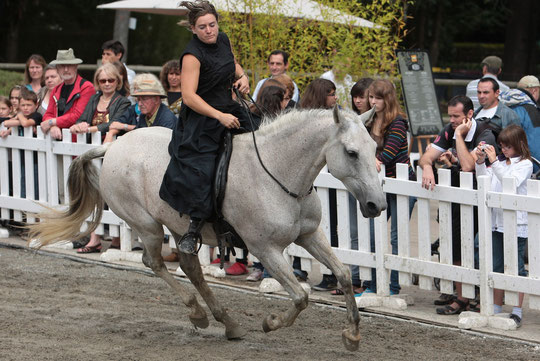 2011, Equestria Tarbes; tableau en collier d'encolure (jument Jardineira).