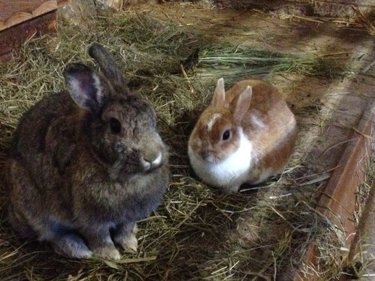 Susi und Henriette haben lange miteinander gelebt, Susi starb nach kurzer heftiger Erkrankung am 21. Juli. Henriette ist ihr drei Tage später gefolgt.