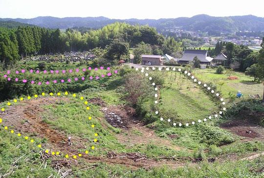 樹木葬全景。ピンクで囲まれた場所が第一樹木葬地。白が第二樹木葬地。黄色が第三、第四樹木葬地