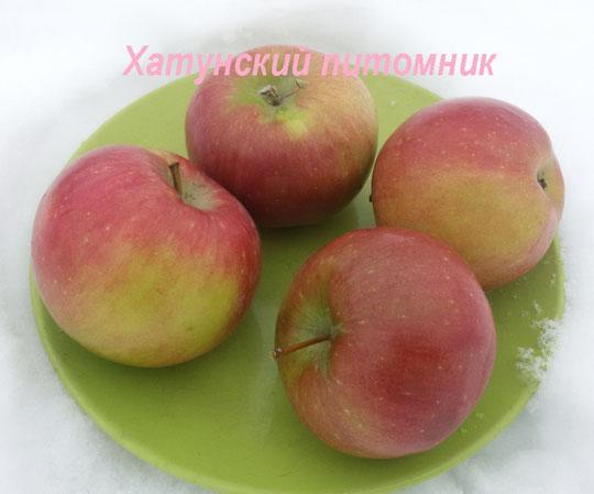 купить саженцы сорта яблони Белорусское сладкое