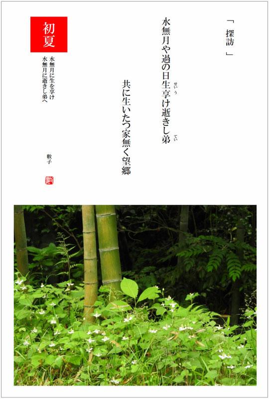 2016/07/26制作 散策路の竹林
