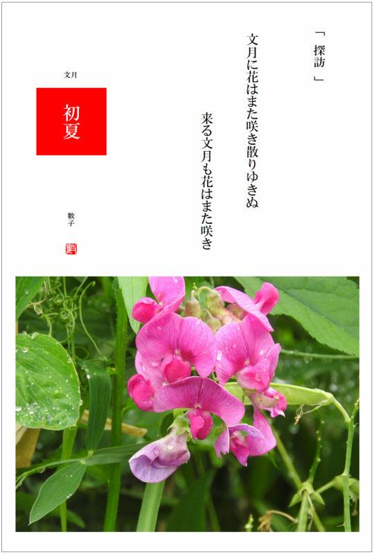 2016/07/02制作 散策路の矢筈豌豆(やはずえんどう)