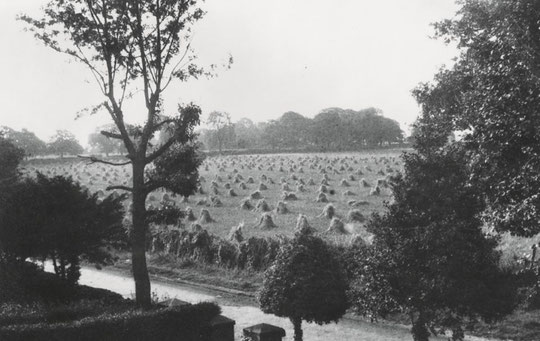 Stooks opposite 98 Greenwood Road (Northanger Avenue site) (Margaret Glass)