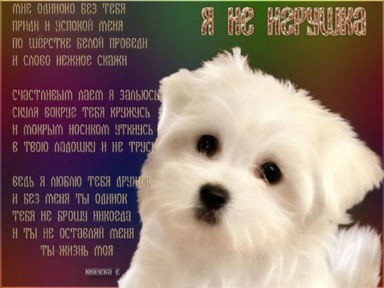 Картинки по запросу стихи о собаках