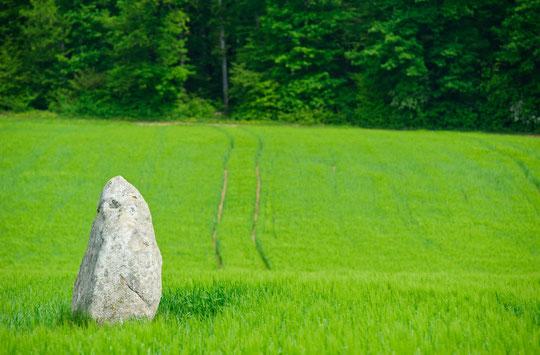 Le menhir du Devens (© YL)