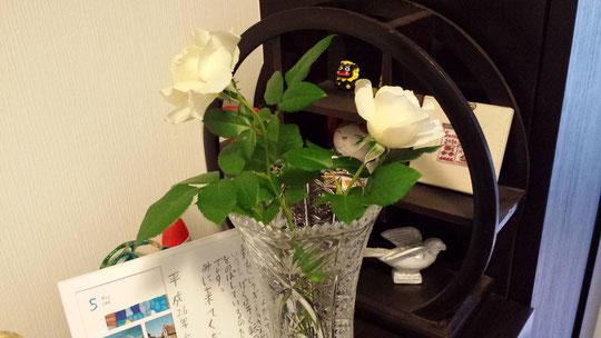 Deux superbes roses blanches cultivées maison