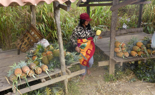 Phou Khoun to Phonsavan by bike - A whole pineapple for 50 cent